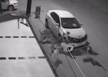 Así destrozó una decena de perros callejeros un coche en Turquía