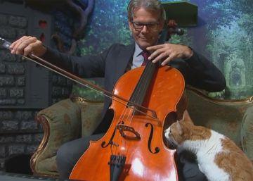 El disco para gatos que lidera las ventas de música clásica