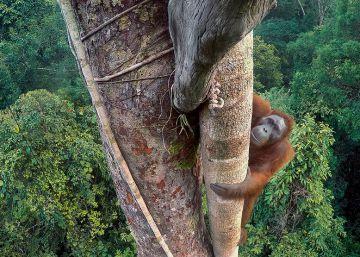 Las fotos ganadoras del 'Wildlife Photographer of the Year 2016'