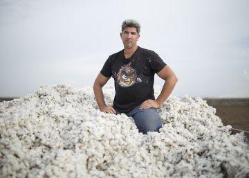 El cultivo de algodón en España