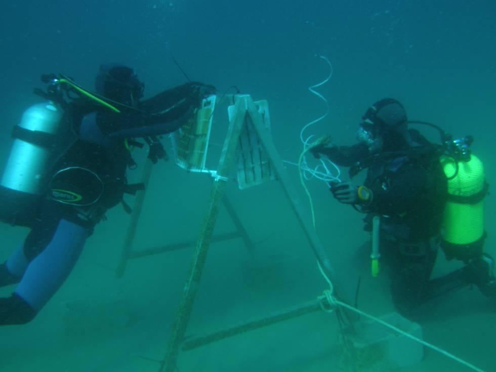 Dos buzos realizan un trabajo en el mar de validación experimental de la dinámica marina.