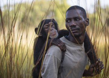 Douda Keita lleva al chimpancé Noel a pasear.