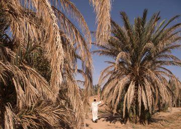 La agricultura sostenible merece todo el protagonismo en Marrakech