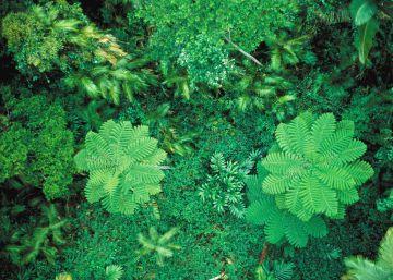 Las emisiones de CO<sub>2</sub> aceleran la fotosíntesis de las plantas