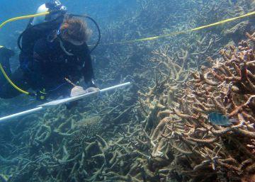 El cambio climático destruye la mitad del mayor arrecife de coral de Japón