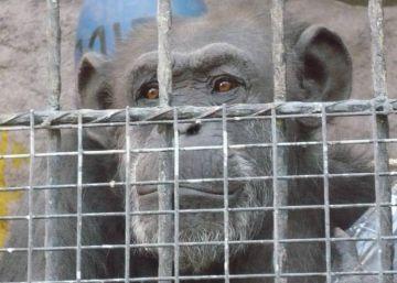 Los animales también tienen derechos humanos