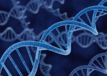 La edición del genoma logra devolver parcialmente la vista a ratas ciegas