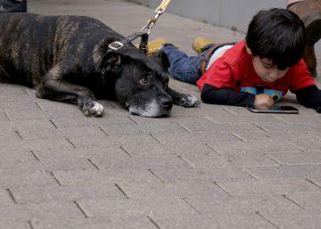 ¡Mamá, quiero por Reyes un perro!