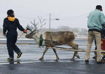 Una pizzería entrena a renos para los repartos a domicilio en Japón