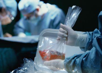 Vuelven las quimeras para crear órganos humanos