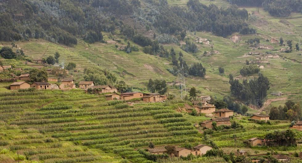 Cultivos en terraza en Ruanda.