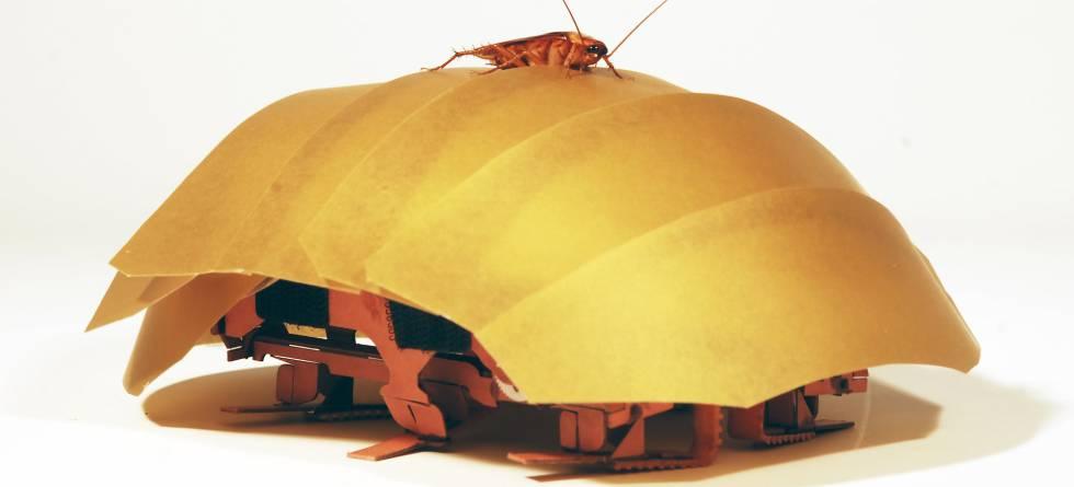 CRAM, el robot cucaracha de la Universidad de Berkeley, comparado con su modelo, la cucaracha roja.