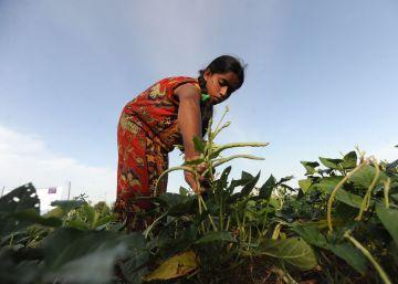 Cultivar legumbres para salvar los suelos