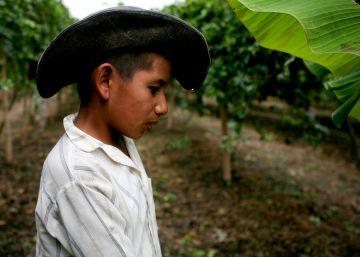 La paz se siembra en el campo colombiano