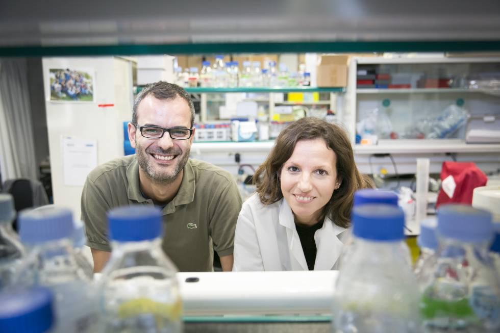Descobertas as células que iniciam a metástase do câncer