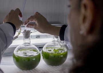 Microalgas para crear superalimentos