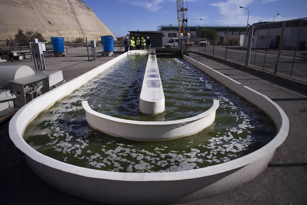 Detalle de un fotobiorreactor tipo raceways, en el que circulan las algas de forma constante.