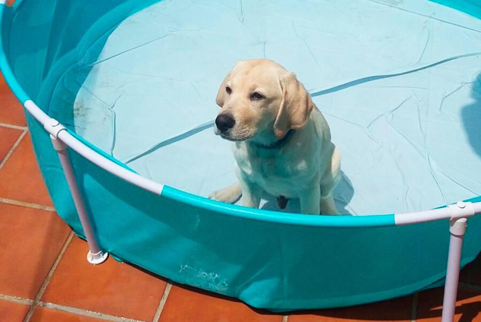 Con cuatro meses 'Bruce' recibió una piscina de plástico (muy duro) como premio.