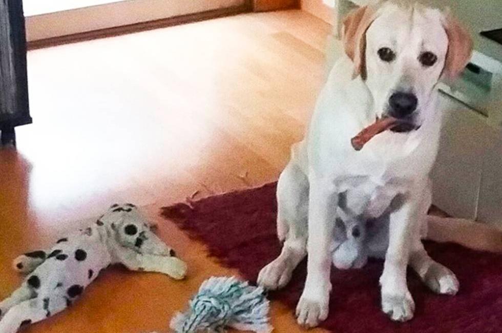 Trucos para que tu perro no te destroce la casa cuando se - Cuando se puede banar a un perro ...