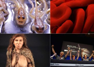 Test de actualidad   ¿Cuánto sabes de lo que ha pasado en 2016 en Ciencia?