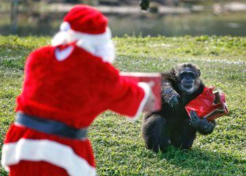 Los animales también celebran la Navidad