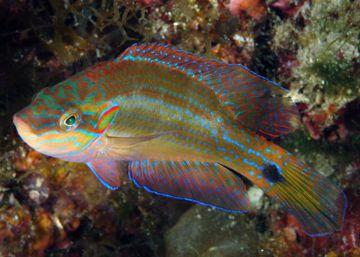 El olor del agua modifica el comportamiento de los peces