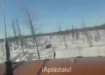 El vídeo de un atropello a un oso que ha conmocionado a Rusia