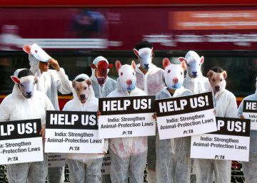 El plan holandés para cerrar los criaderos de visones