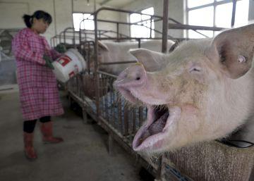 Amenazas para el planeta de las que nadie se entera porque están en chino