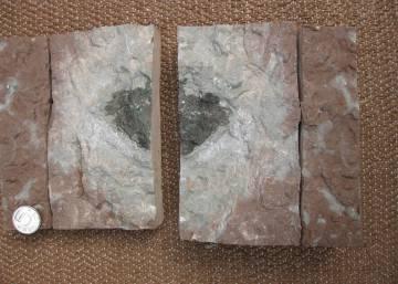 Hallado el primer fragmento del asteroide que cambió la vida en la Tierra