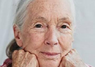 "Jane Goodall: ""Son sexis los chimpancés"""