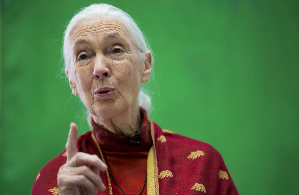 Jane Goodall en la entrega de premios en Madrid.