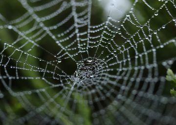 Producen de forma artificial el tejido natural más resistente que el acero