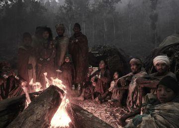 Los reyes de los bosques del Himalaya