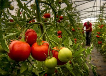 A scientific solution for tomatoes that don't taste like tomatoes