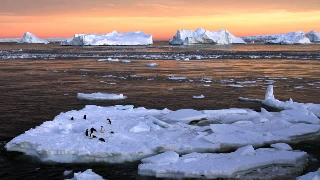 Pingüinos sobre el hielo en la Antártida.
