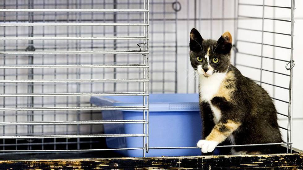 Un gato en una jaula en un refugio de animales de Utrecht.