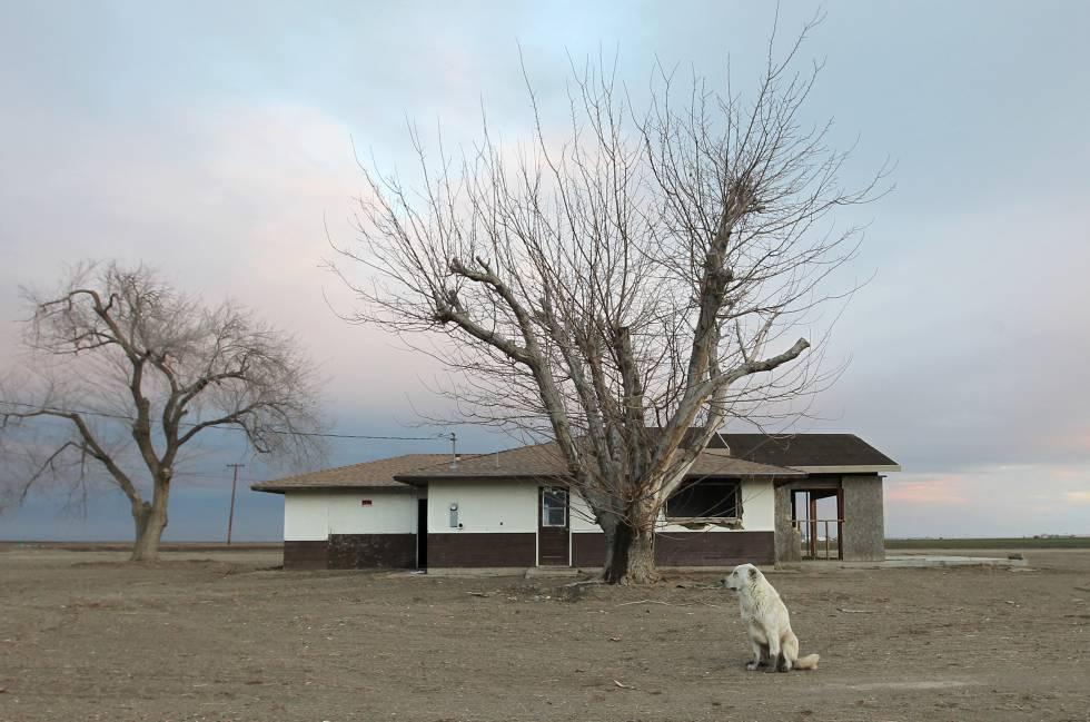 Un perro abandonado en las inmediaciones de una granja deshabitada cerca de Bakersfield (California).