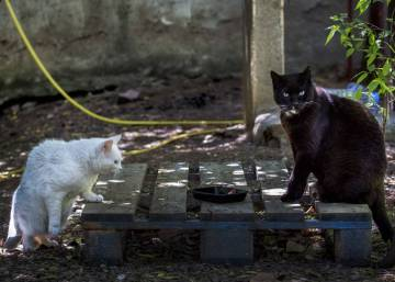 What to do about Spain's street cats?