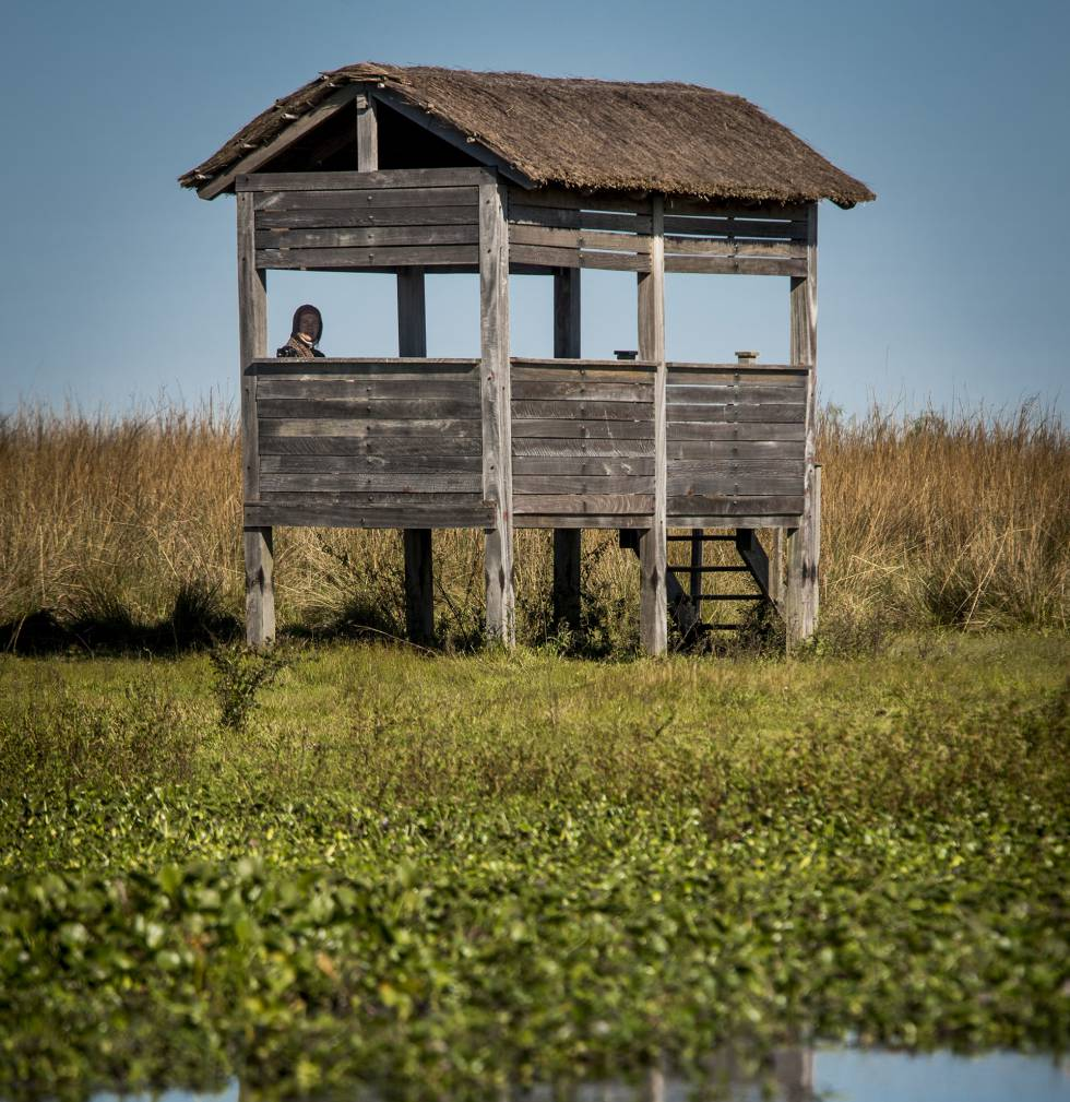 One of the bird hides in the middle of the Iberá lagoon.