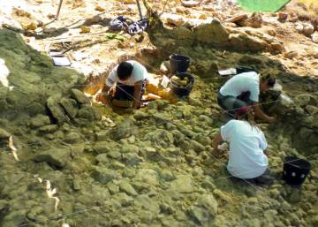 A Neanderthal trove in Madrid