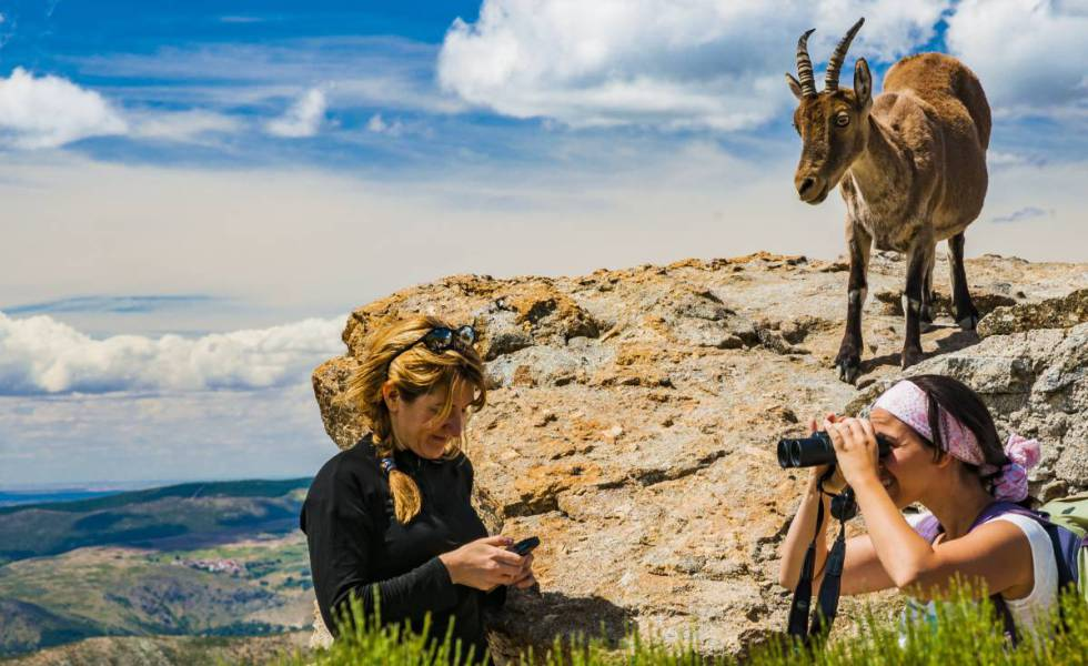 Two hikers with a goat in the Sierra de Gredos mountains in Avila province.