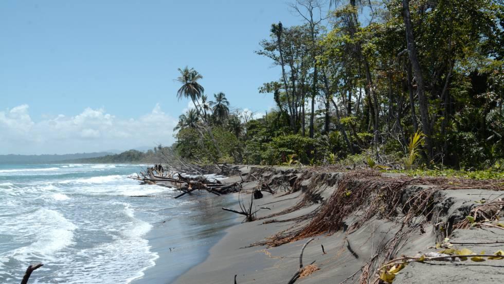 El mar avanza sobre el Parque Nacional de Cahuita, en el Caribe costarricense.