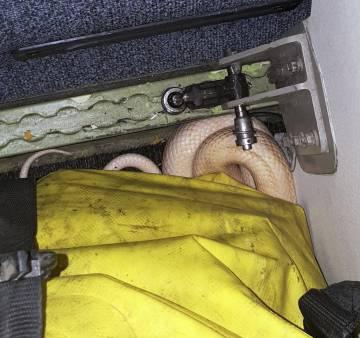 La serpiente, enrollada bajo una bolsa.