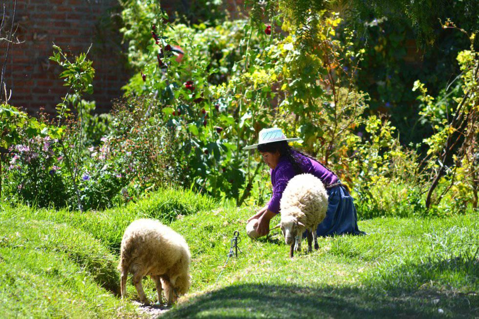 La familia Rojas, campesinos con cuatro hijos, ni siquiera sabía de la existencia del Chagas pese a vivir en Punata, una zona endémica en Bolivia.