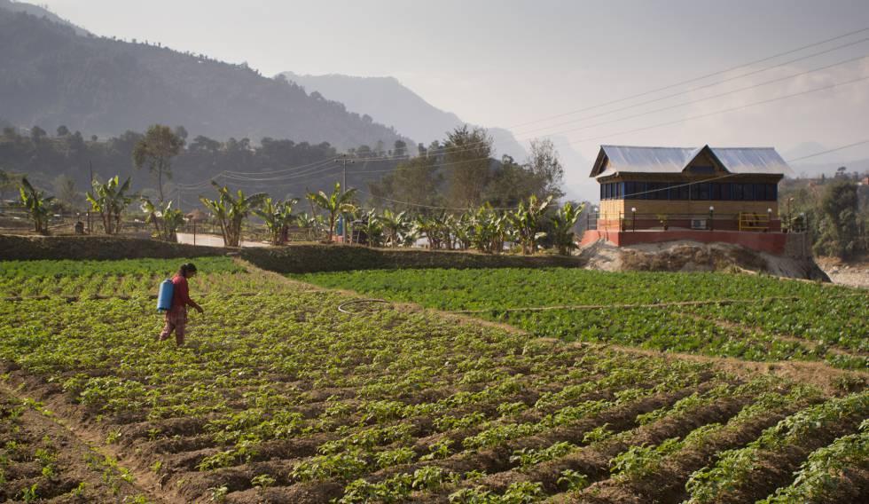 Un campo nepalí