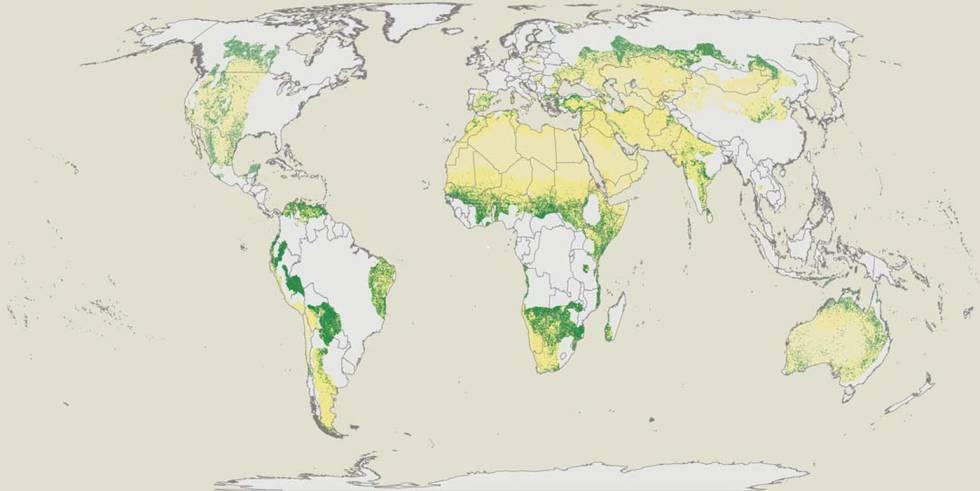El mapa muestra las regiones áridas del planeta y, en función de su verdor, la presencia de arbolado.