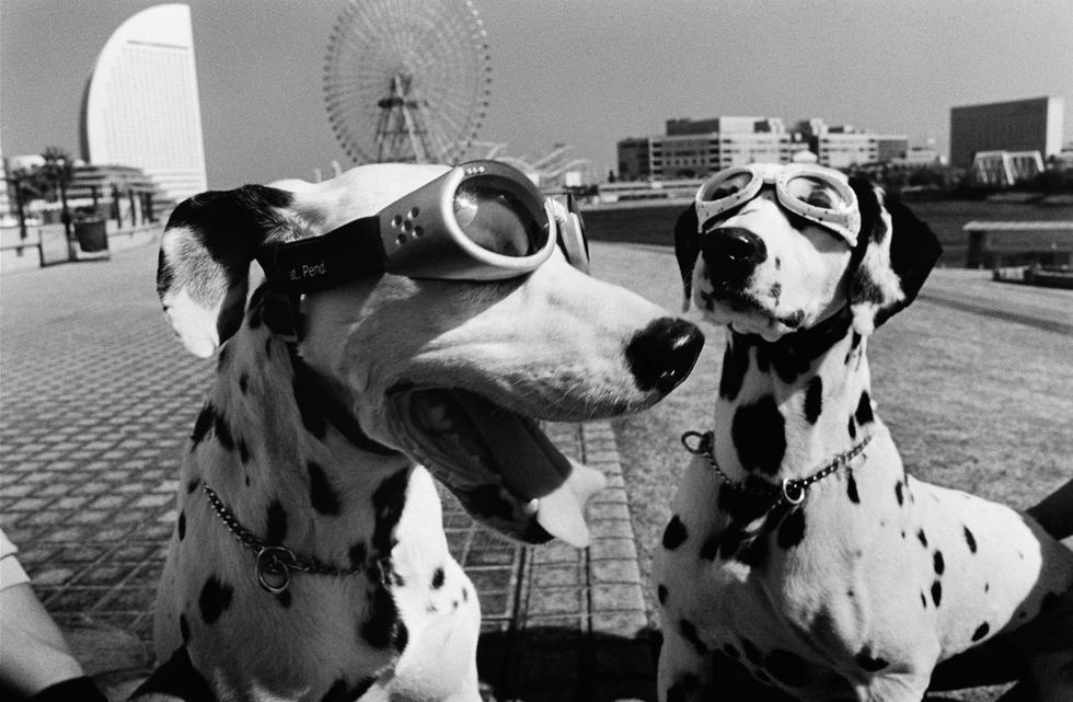 Perros, los mejores amigos del hombre