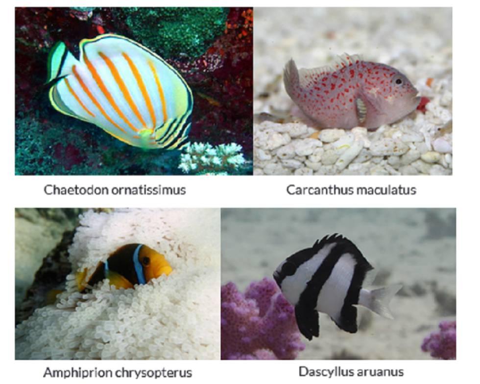 El cambio climático hará más difícil encontrar a Nemo