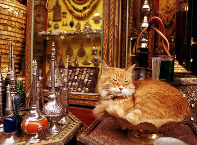Un gato dormita en una tienda del zoco de Marrakech